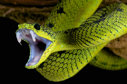 Pit of (coupling) snakes - communication contracts (when done wrong)