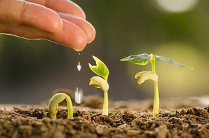 Growing your team organically